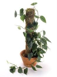 10 Best Houseplants To De by The Easiest Indoor House Plants That Won U0027t Die On You Today Com