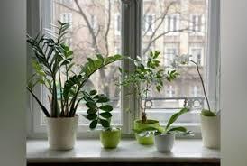 plante pour cuisine vertes comment les placer dans la maison
