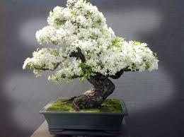 quaintrelle tiny tree take out