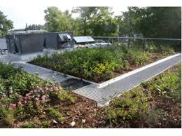 roof garden plants greenroofs com projects breaking ground contracting green roof