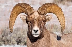 Wyoming wild animals images Travel around the world photo keywords animals and pets hoofed jpg