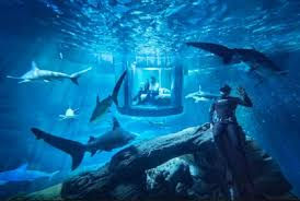 chambre aquarium gagnez une nuit dans une chambre sous marine au milieu des requins