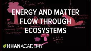 flow of energy and matter through ecosystem ecology khan
