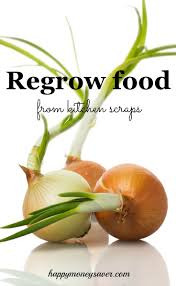 Vegetables You Can Regrow by Regrow Food From Scraps