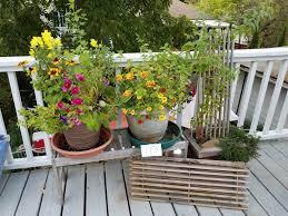 deck plants page 3 saragrilloinvestments com