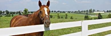 Kentucky How Far Can A Horse Travel In A Day images Top ten things to do in lexington kentucky horse capital of the jpg