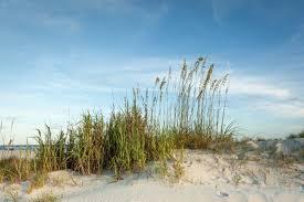 beach vacation rentals hilton head vacations