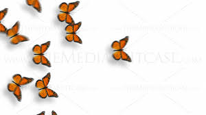 animated butterflies royalty free video