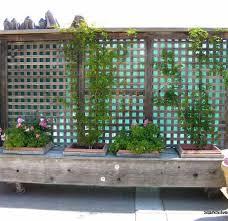 Garden Dividers Ideas Garden Divider Search Tropical Food Forest Ideas