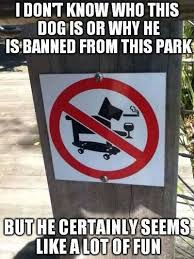 Funny Skateboard Memes - i don t know who this dog is or why he is banned from this park