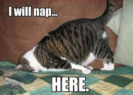 Sleepy Kitty Meme - cat pictures cute animal pictures and videos blog part 9