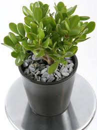 19 easiest houseplants you can grow without care balcony garden web