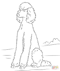 toy poodle coloring page free printable coloring pages clip