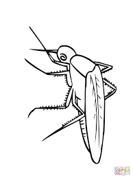 desenho de mosquito para colorir desenhos para colorir e