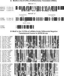 Meme Motif - messenger rnas under differential translational control in ki ras
