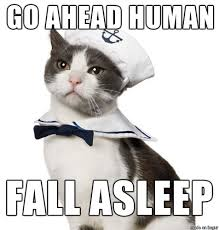 Sassy Cat Meme - sailing sassy cat meme on imgur