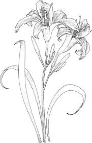 169 best drawings flowers u0026 more images on pinterest drawings