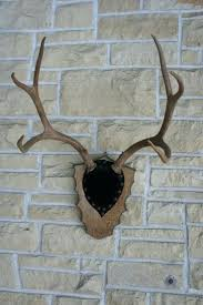 fake deer wall decor antlers image collections home wall decoration ideas