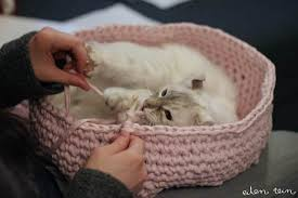 knitting pattern cat cave crochet cat cave lots of ideas the whoot
