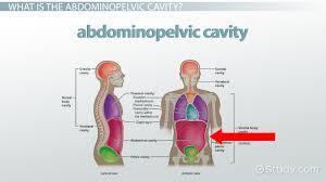 Borders Of The Heart Anatomy Abdominopelvic Cavity Bony Landmarks Organs U0026 Regions Video