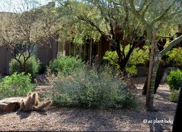 desert native plants water saving landscapes 3 options ramblings from a desert garden