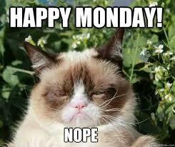 Monday Cat Meme - 69 best grumpy cat images on pinterest grumpy cat quotes funny