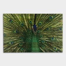 Threshold Aqua Peach Birds Floral Wall Art By Subject Modern Paintings Maps Kitchen Art World