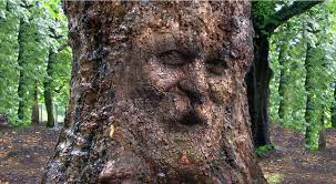 photoshop tutorial how to camouflage a onto gnarly tree
