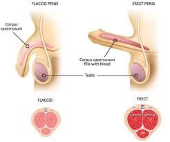 cara memperbesar penis dengan latihan alami cara mengatasi