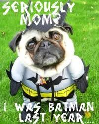 Funny Pug Memes - funny pug pictures crazecentral