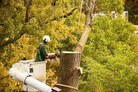 tree removal service the care of trees