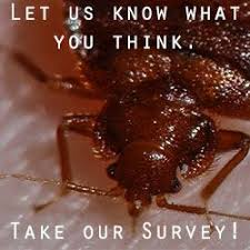 Does Dryer Kill Bed Bugs Best 25 Killing Bed Bugs Ideas On Pinterest What Kills Bed Bugs