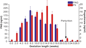 Sheep Gestation Table Temporal Changes In Pregnancy Associated Glycoproteins Across