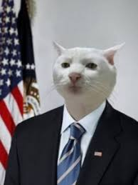 Cat Suit Meme - business cat meme office cat meme