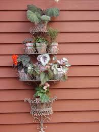 summer vacation for houseplants wisconsin gardening enewsletter