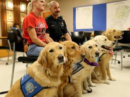 Comfort Golden Retriever Breeders Comfort Dogs Travel To Dallas To Provide Support To Slain Police