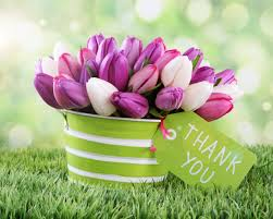 birthday wishes thanksgiving thank you images with tulip flower hd images pics free thank you