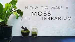 how to make a moss terrarium youtube