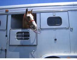 Blind Chance Trailer How To Load A Horse Into A Trailer Horse Journals