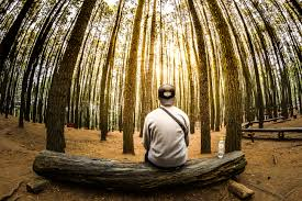 man siting on log in center of forest panoramic photo free stock