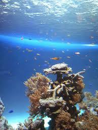 sweet life japan sunshine city aquarium and tv shooting