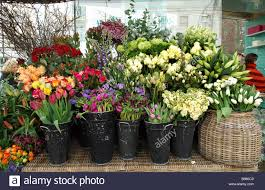 selection of different flowers for sale in at heart florists