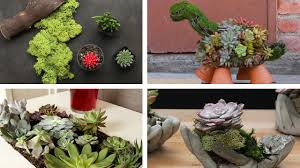 succelents 6 beautiful ways to plant succulents youtube