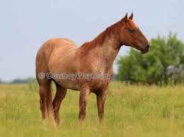 Black Mustang Horse Pictures Horse Names Names With Meanings Or Descriptions For Your Horse