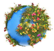 chesters flowers worldwide flower delivery