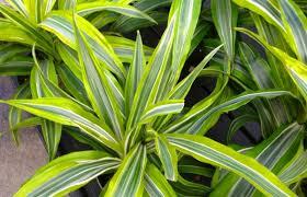 25 Easy Houseplants Easy To by Gardening In Winter Indoor Houseplants U2013 Carycitizen