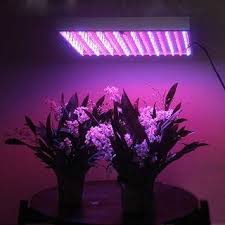 how does light affect plant growth how does artificial light affect plant growth let it grow