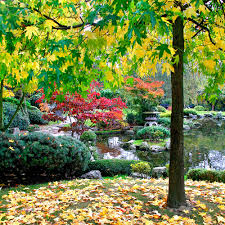 Japanese Style Garden by Japanese Style Garden Plants Top Find This Pin And More On My