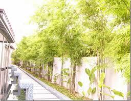 Bamboo Garden Design Ideas Garden Design Garden Design With Clumping Bamboo Landscape U