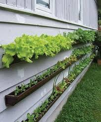 small kitchen garden ideas get started growing 5 easy small vegetable garden ideas to try